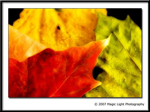 November Photo Project: Autumn Colours-crw_2604.jpg
