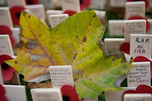 November Photo Project: Autumn Colours-vv9w9262.jpg