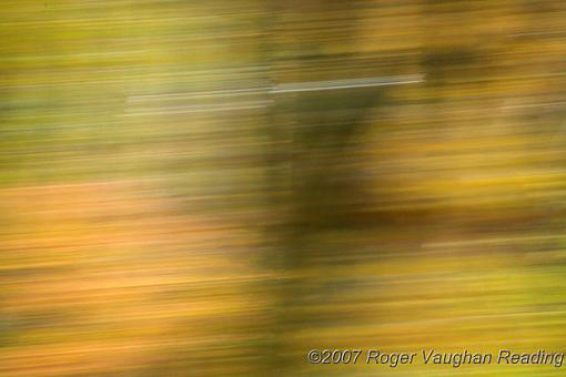 November Photo Project: Autumn Colours-_mg_3101-640.jpg