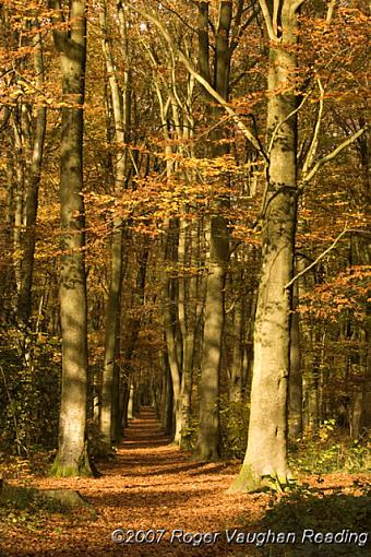 November Photo Project: Autumn Colours-_mg_3026-640.jpg