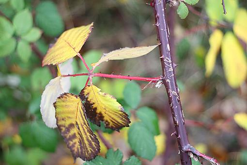 November Photo Project: Autumn Colours-img_6233_1.jpg