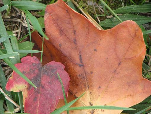 November Photo Project: Autumn Colours-img_0487-fall-leaves.jpg