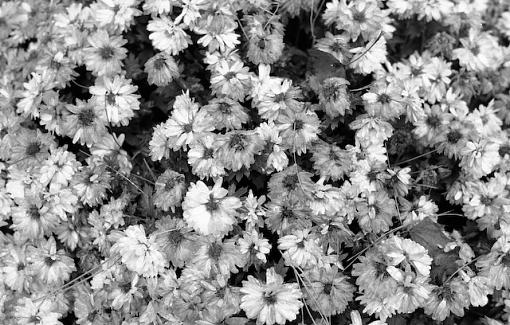 November Photo Project: Autumn Colours-11242007-3.jpg