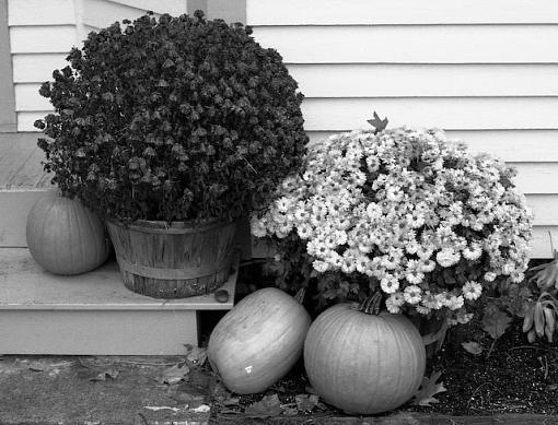 November Photo Project: Autumn Colours-11242007-4.jpg