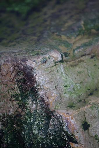 December Photo Project: Textures-pa3p6412.jpg