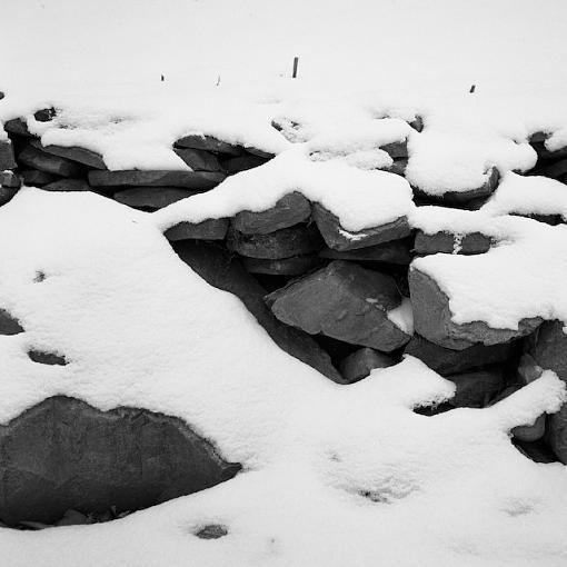 December Photo Project: Textures-12082007-3.jpg
