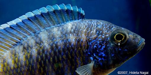 December Photo Project: Textures-textures-fishy-5.jpg