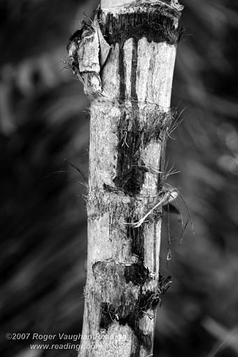 December Photo Project: Textures-_mg_3985-b-w-640.jpg
