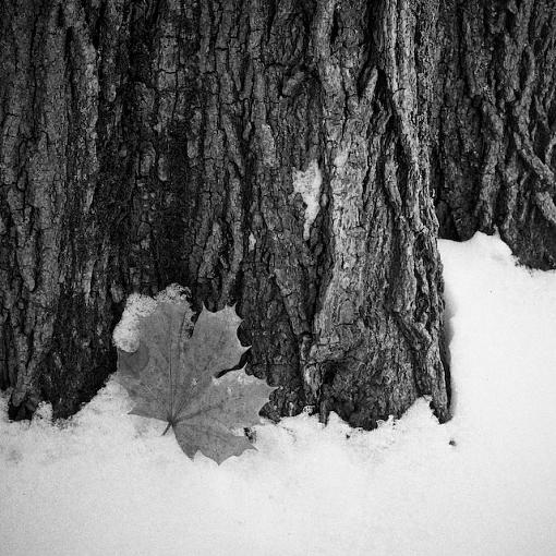 December Photo Project: Textures-12152007-5-edit.jpg