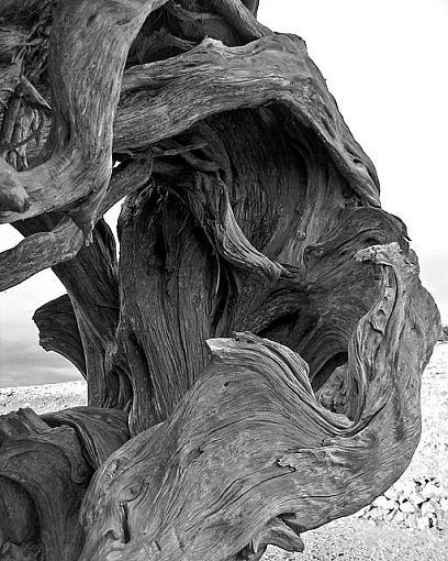 December Photo Project: Textures-el-hierro-sabina-7-1.jpg