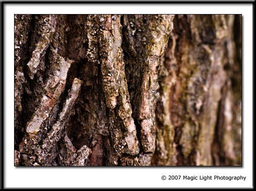 December Photo Project: Textures-crw_3386.jpg