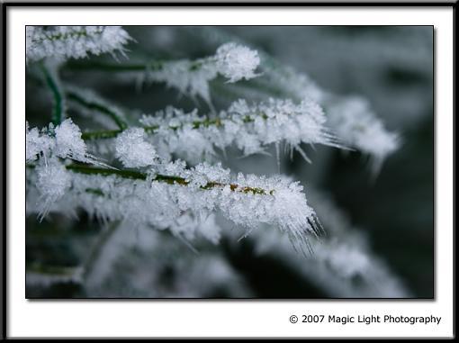 December Photo Project: Textures-crw_3440.jpg