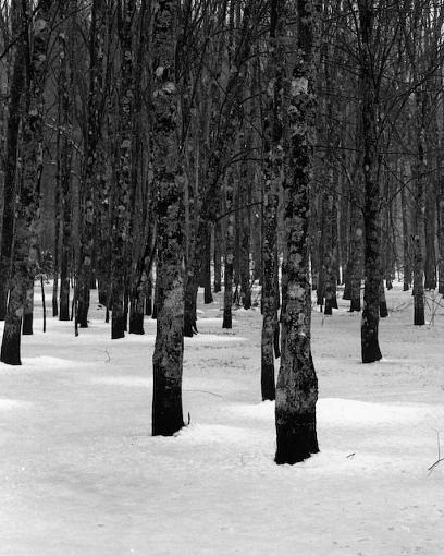 February Photo Project: Lanscapes-02052008-1.jpg