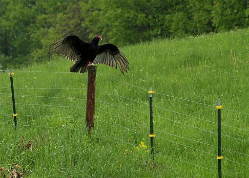 May Project: Life-birdy-medium-.jpg