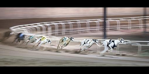 October Project: Motion-dogs3web.jpg