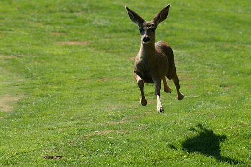 October Project: Motion-deer.jpg