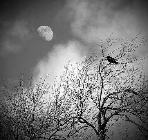 2009 April Project: B&W-stephenson-raven.jpg