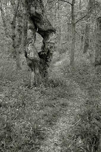 2009 April Project: B&W-strange-tree.jpg