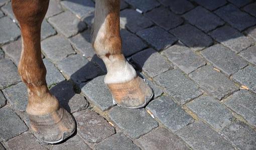 May Project  FEET-sort-feet.jpg
