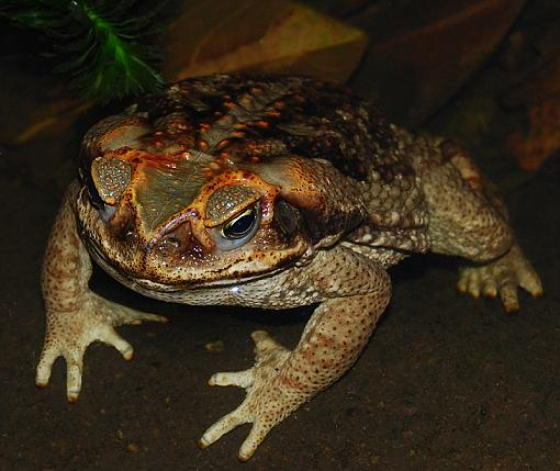 May Project  FEET-toad-feet.jpg