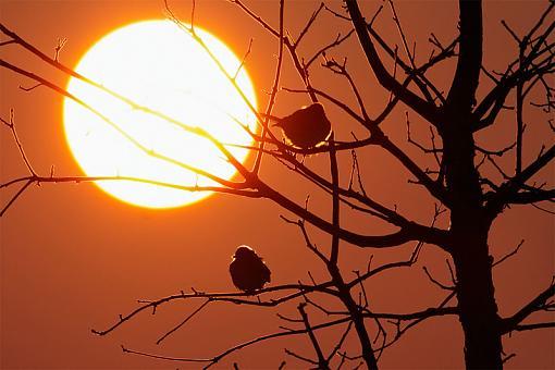 April Project........lens flare-sunset-2.jpg