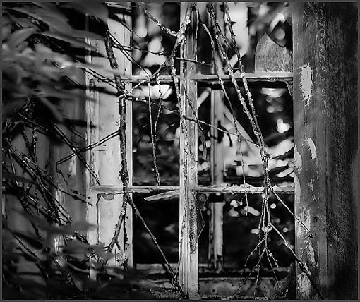 """June Project  """"Windows""""-window-2-800.jpg"""