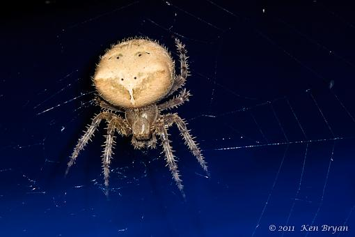 August Project: In_Close-20110817_spider_xsi_3445.jpg