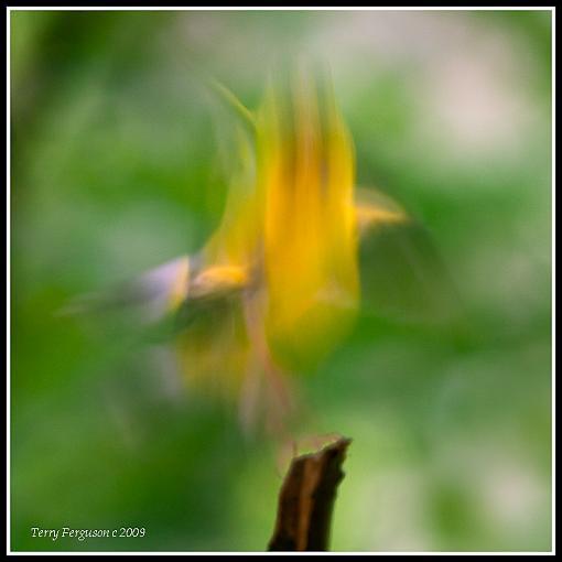 September project...Long exposure aka motion-img_4523-edit.jpg