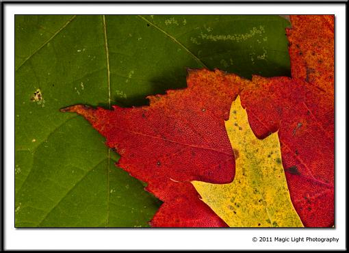 October Project : Fall Atmosphere-_mg_5060.jpg