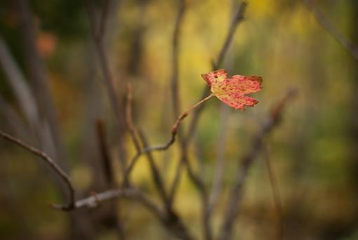 October Project : Fall Atmosphere-20111006-nature-23.jpg