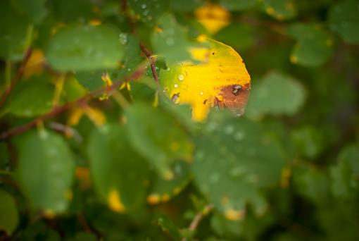 October Project : Fall Atmosphere-20111006-nature-20.jpg