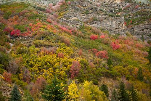 October Project : Fall Atmosphere-20111006-nature-19.jpg