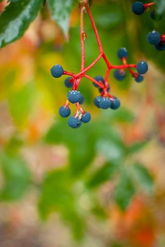 October Project : Fall Atmosphere-20111006-leaves-3.jpg