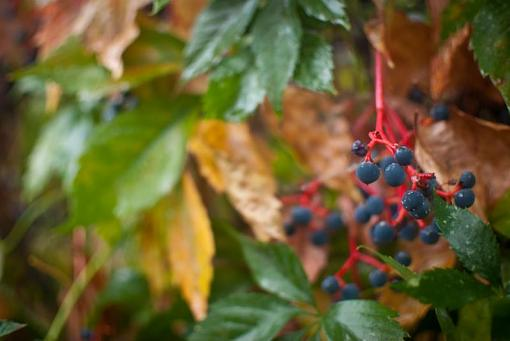 October Project : Fall Atmosphere-20111006-leaves-2.jpg