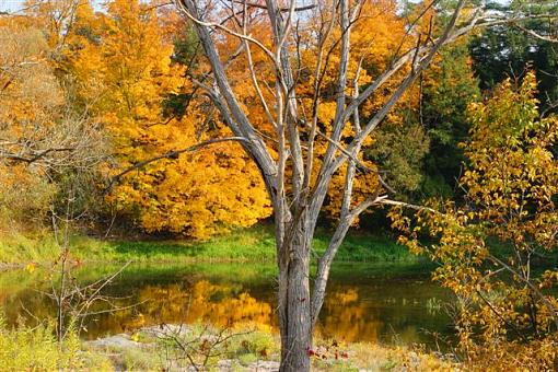 October Project : Fall Atmosphere-img_4850.jpg