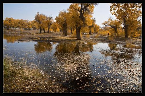 October Project : Fall Atmosphere-leavespond.jpg