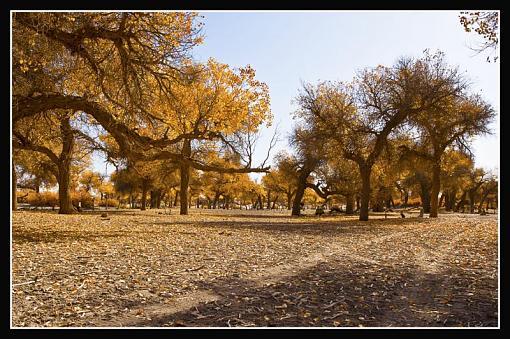 October Project : Fall Atmosphere-fallleaves.jpg