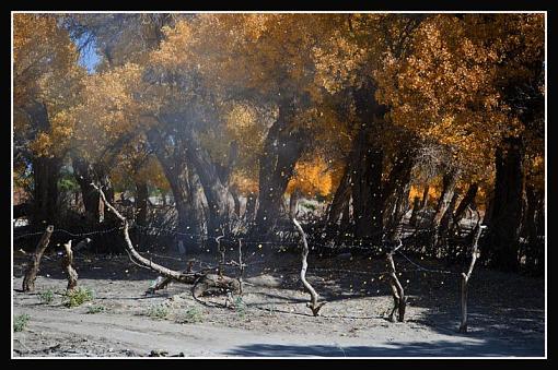 October Project : Fall Atmosphere-fallingleaves.jpg