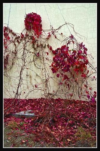 October Project : Fall Atmosphere-redleavesfall.jpg