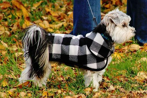 October Project : Fall Atmosphere-new-fall-coat.jpg
