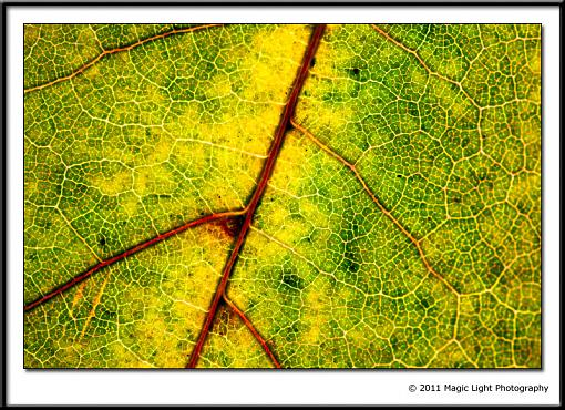 October Project : Fall Atmosphere-_mg_6242.jpg