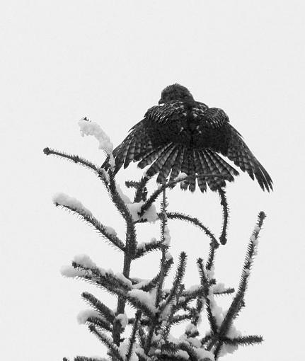 January 2012 Project - B&W Photography-treetopangel.jpg