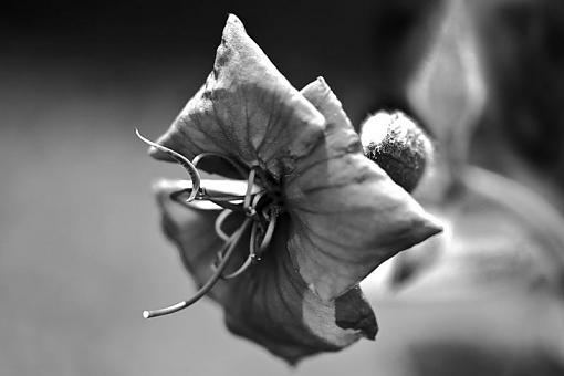 January 2012 Project - B&W Photography-flowerbw.jpg
