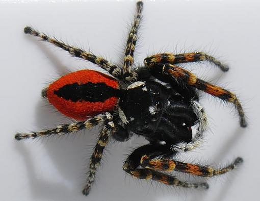 MARCH Project : Macros!-red-spider.jpg