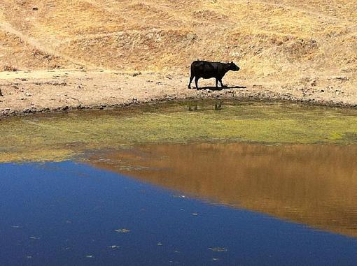 August project....animals-sj-sierra-road-ride-a6.jpg