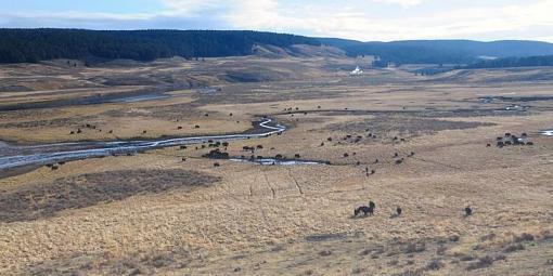 August project....animals-bison-valley-_jre9099-web1000sr72.jpg