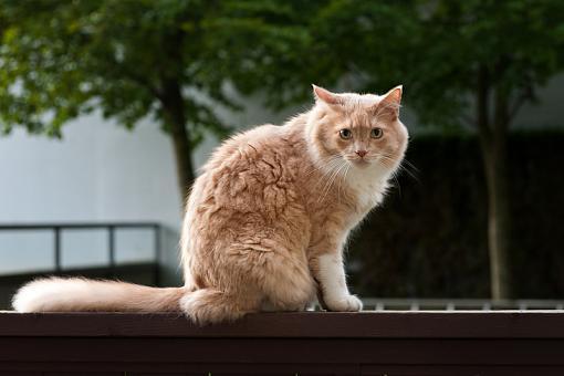 August project....animals-cat-next-door.jpg