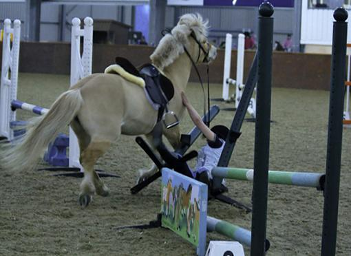 horse wrecks-crash3.jpg