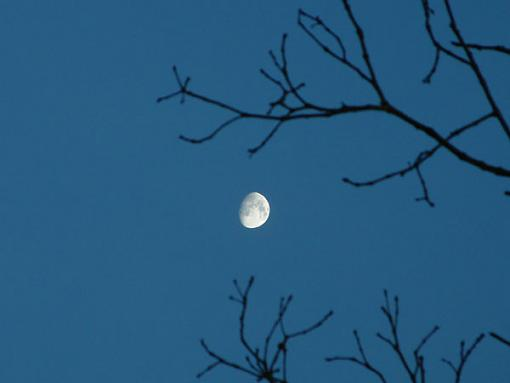 One for Speed to rip apart.-moon-tree.jpg