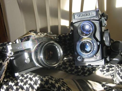 Camera Family Portrait-gleaming-duo.jpg
